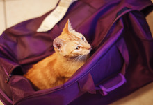 Cute Rad Cat In The Violet Bag