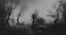 Spooky Dark Landscape Showing Silhouettes Of Trees In The Swamp