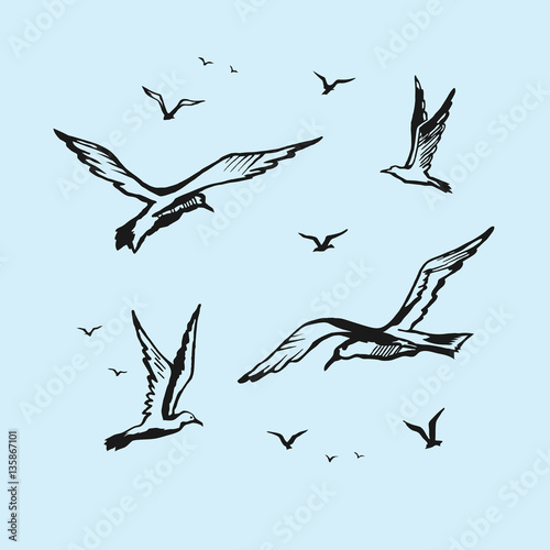 Photo Seagulls vector sketch drawing by hand