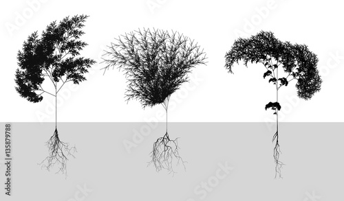 Canvas Print Black naturalistic cereals with root system - vector illustration