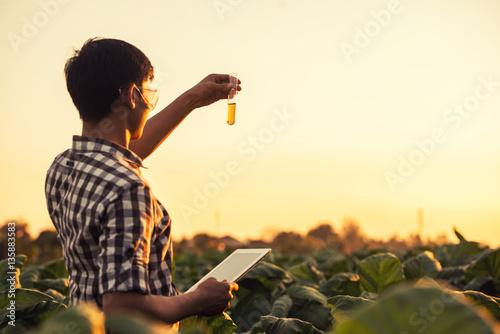 Foto  Farmer researching plant in tobacco farm