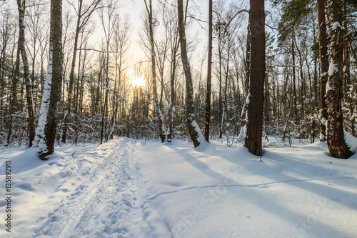 Tuinposter Weg in bos beautiful sunrise at pine forest at winter season