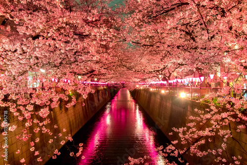 Photo  Cherry Blossoms at night in Tokyo