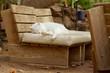 Sleeping Cat Near Seashore in Eilat, Israel