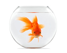 Goldfish Floating In Glass Sph...