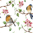 Watercolor pattern with tree branches, birds and apple blossom. Hand painted spring ornament with robin redbreads and floral elements with leaves isolated on white background. For design and fabric