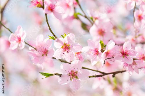 Obraz Piękne wiosenne kwiaty - fototapety do salonu