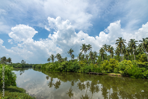 Printed kitchen splashbacks River Tropical palm forest on the river bank. Tropical thickets mangro
