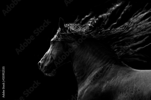 Obraz na plátne Black horse running on black background