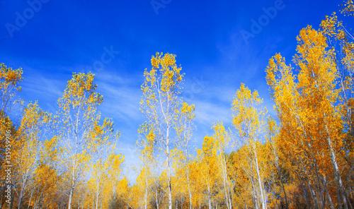 Foto op Canvas Donkerblauw paisaje otoñal