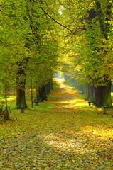 Fototapeta Drzewa Jesienna aleja
