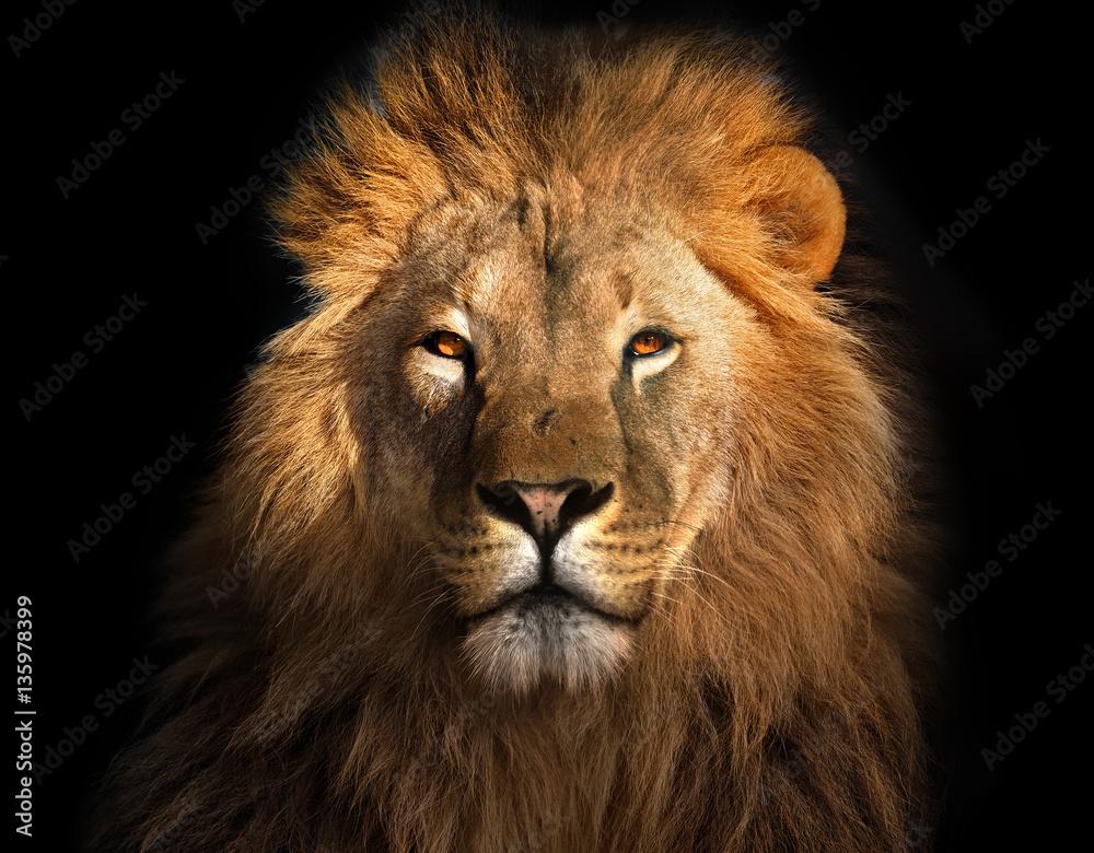 Fototapeta Lion king isolated on black