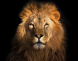 canvas print picture - Lion king isolated on black