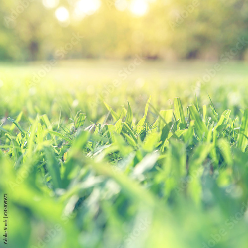 Spring and summer background concept, Close up green grass field with blurred park background and sunlight.
