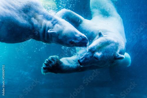 Foto op Plexiglas Ijsbeer Polar Bears Underwater