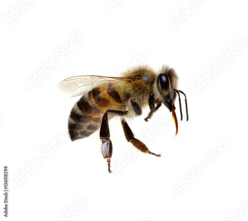 In de dag Bee Bee on the white
