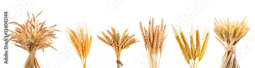 various wheat ears isolated on white background