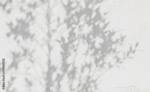 shadows leaf on a white concrete rough texture wall