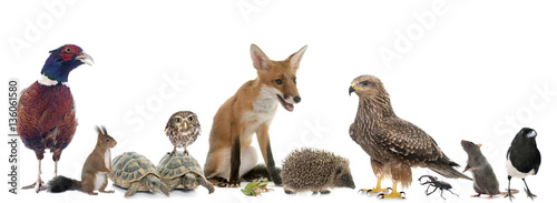Photo  group of wild animals in Europe