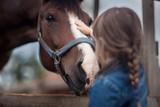 Fototapeta Konie - Cute girl feeding her horse in paddock