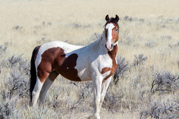 Fototapeta na wymiar Pferde
