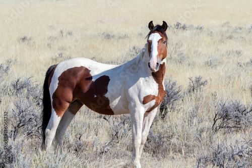 Obrazy na płótnie Canvas Pferde