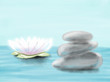 Hand drawn colorful colorful water-lily and stones, illustration by pencil