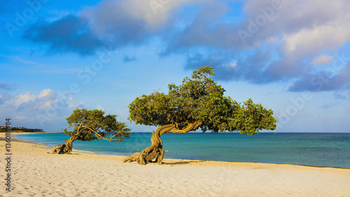 Eagle Beach Aruba Canvas Print