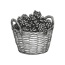 Grapes In Basket.