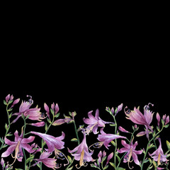 Fototapeta Łąka The frame of the branches with purple hosta flower. Lilies. Hosta ventricosa minor, asparagaceae family. Hand drawn watercolor painting on black background.