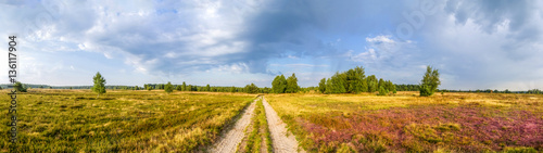Panorama, Lüneburger Heide Canvas Print