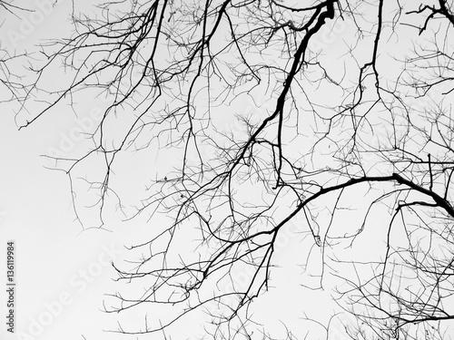 Obrazy szare szare-galezie-drzewa