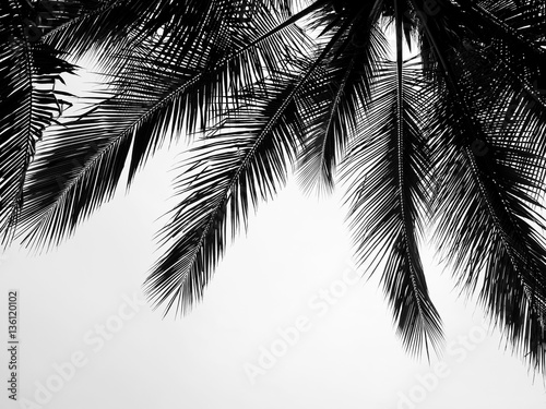 Stampa su Tela  beautiful palms leaf on white background