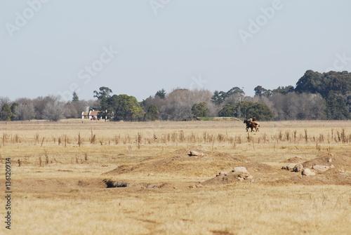 Poster Donkergrijs caballos en el campo