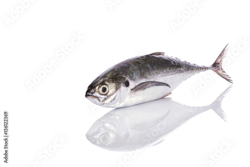 Fresh fish (torpedo scad). Studio shot isolated on white Slika na platnu