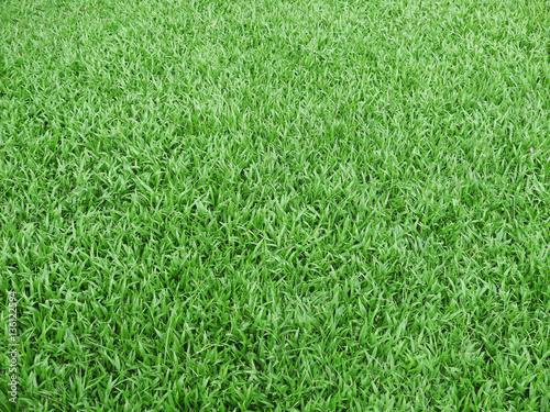 Foto op Plexiglas Groene green grass - real green grass background