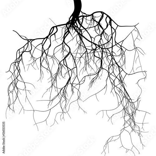 Black root system Canvas-taulu
