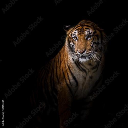 Deurstickers Luipaard Tiger.