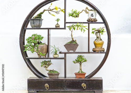 Miniatures bonsai pots in decorative circular wooden frame in the living room