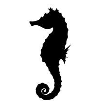 Seahorse Silhouette Illustration
