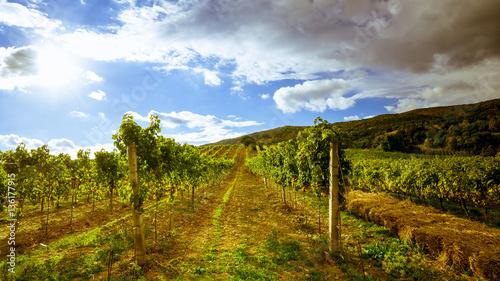 Fotografia  Weingarten mit Sonne und Wolken