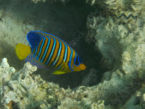 Fototapety, obrazy: barriera corallina