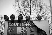 Pigeons Of London