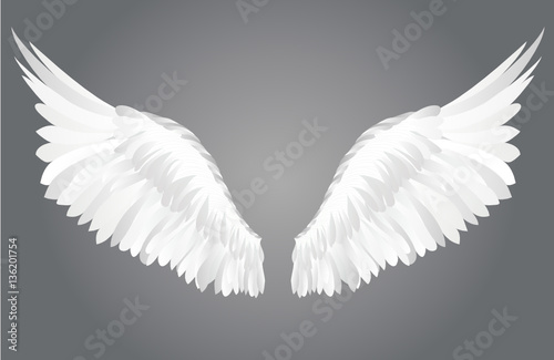 Poster Cygne Wings. Vector illustration on grey background.