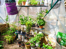 A Small Private Greenhouse In Early Spring When Flower Plants An