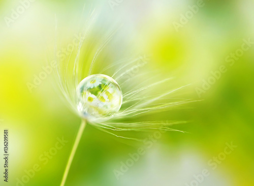 Fototapeta Rain drop dew on a dandelion seed in the wind  with reflection of flowers daisies on a meadow outdoors spring macro summer with soft focus.  Amazing delicate fresh air artistic image. obraz