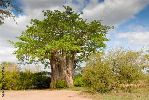 In de dag Baobab Affenbrotbaum in Südafrika