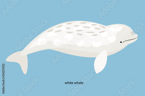 Fotografie, Tablou  Arctic inhabitants white whale on a blue background