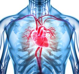 Panel Szklany Do gabinetu lekarskiego/szpitala 3D illustration of Heart, medical concept.