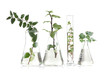 Leinwandbild Motiv Plants in flasks isolated on white